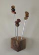 Seedling coat hanger with walnut base
